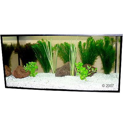 plantes d 39 aquarium zooplants poisson rouge 9 plantes of zooplus fr be 52343 0. Black Bedroom Furniture Sets. Home Design Ideas