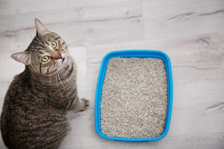 litières pour chat
