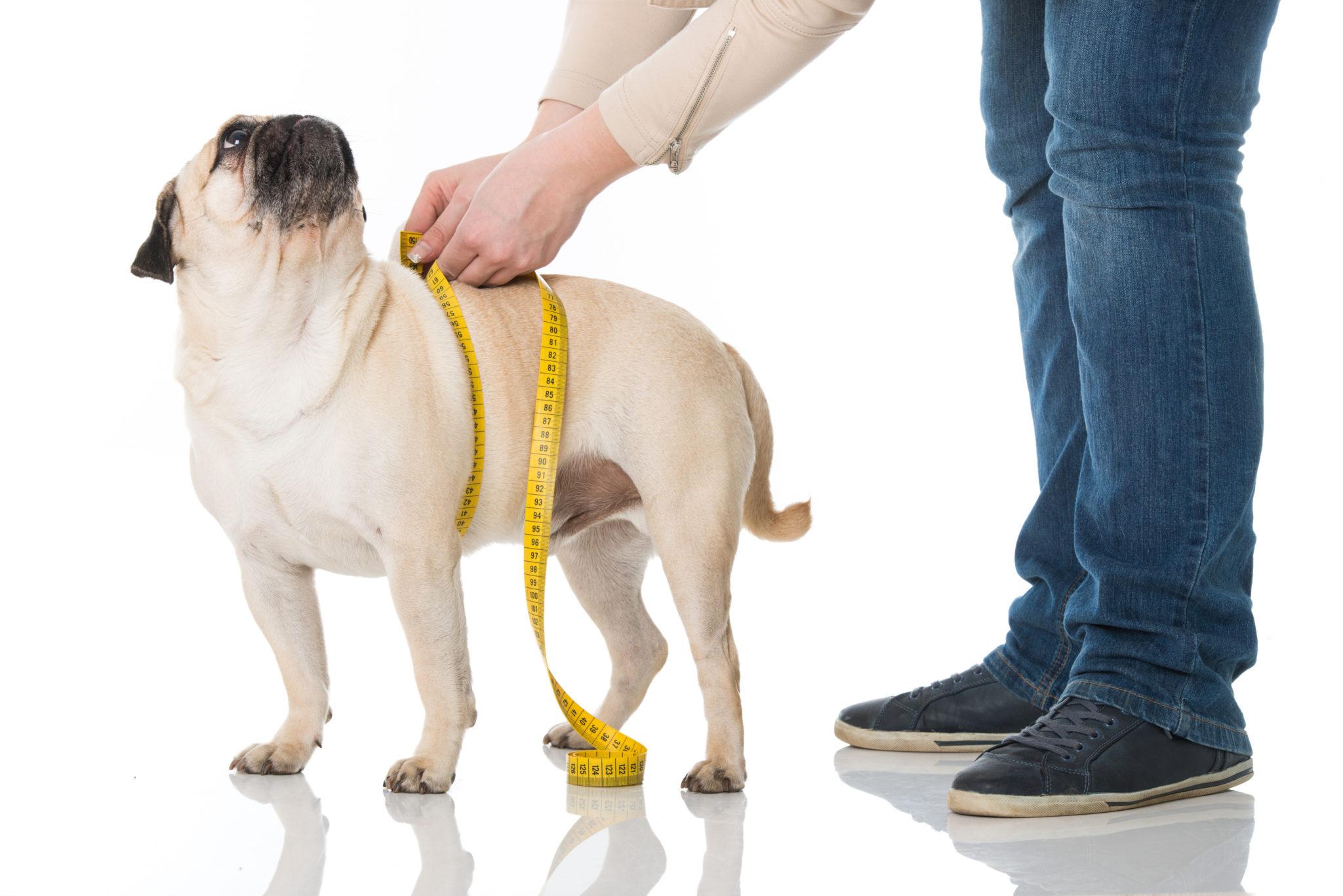 calculateur d alimentation de chien en poids