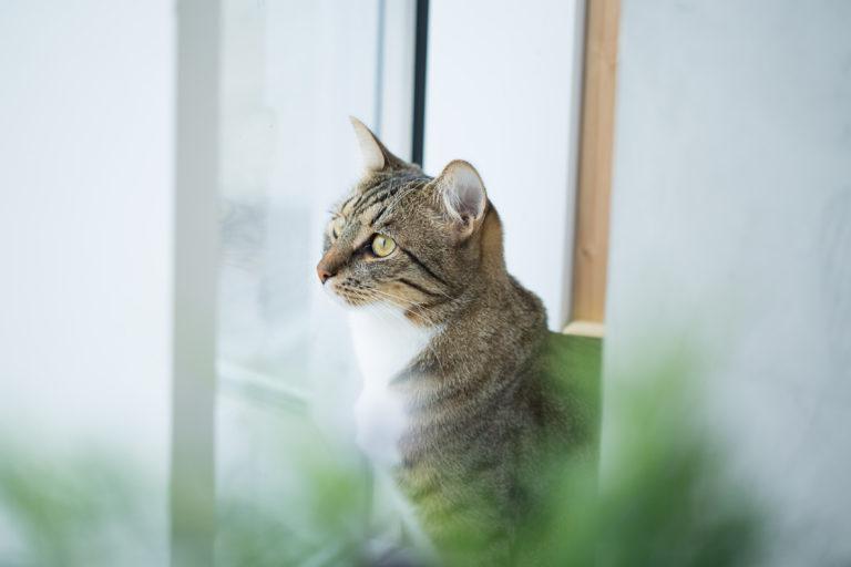 menthe chat cataire quels bienfaits pour les f lins magazine zooplus. Black Bedroom Furniture Sets. Home Design Ideas