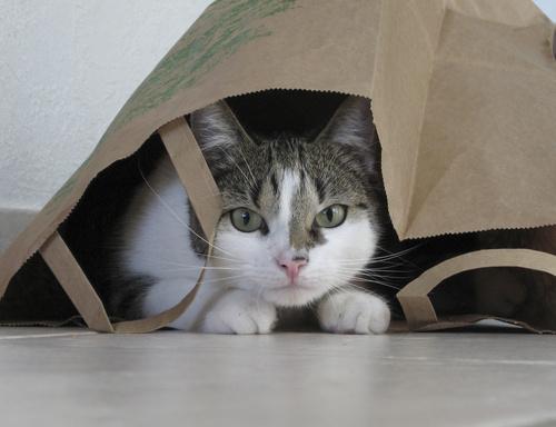 jouer avec son chat cache-cache