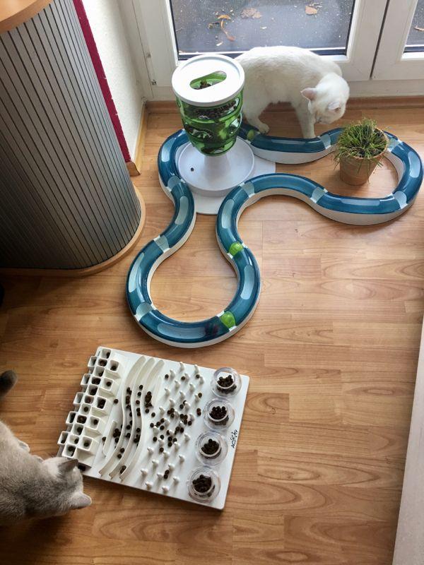jeux d'intelligence pour chat