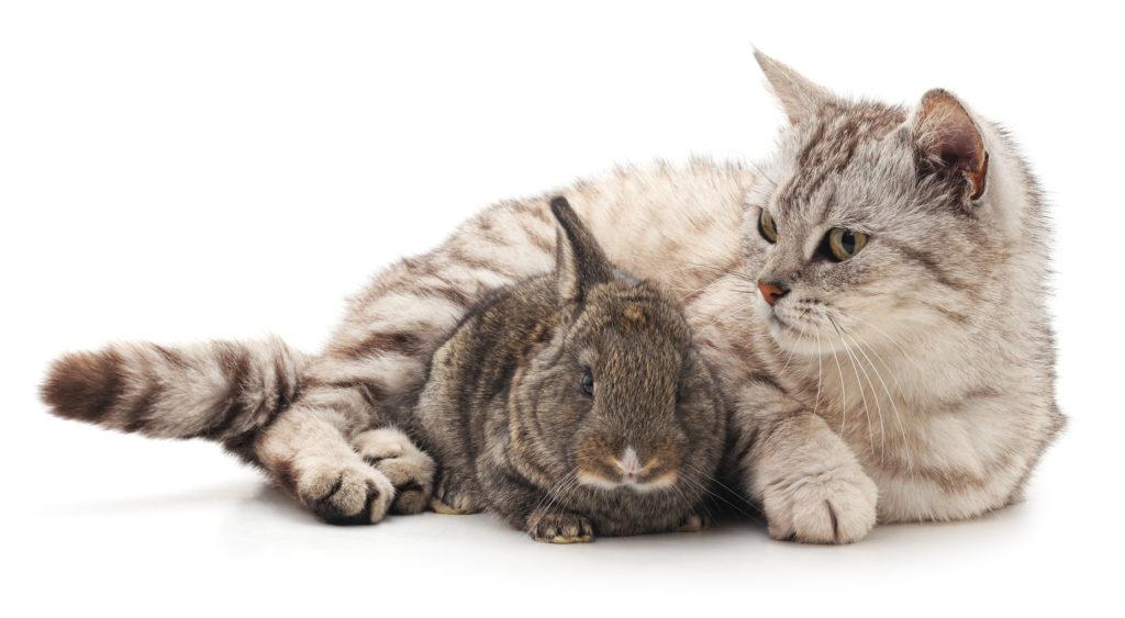 chat et rongeur