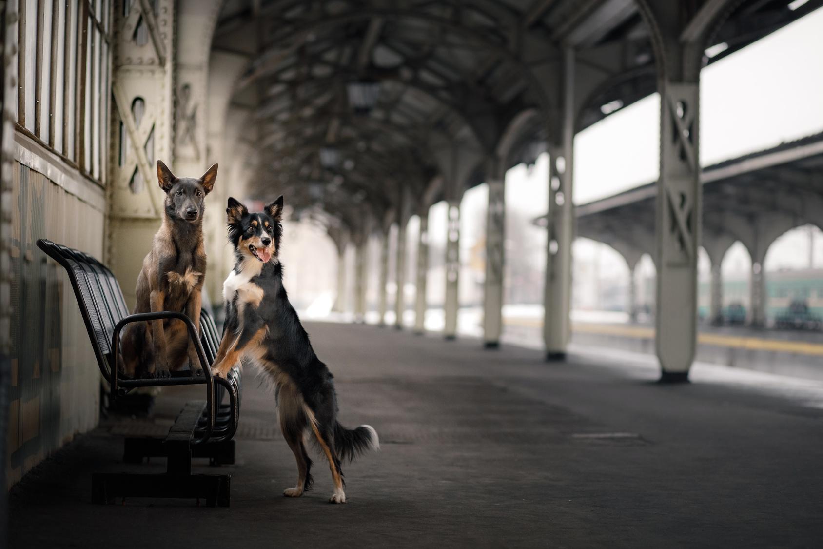 voyager en train avec un chien