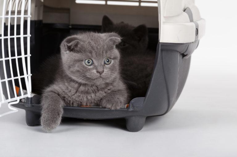 voyager avec son chat en avion conseils et astuces. Black Bedroom Furniture Sets. Home Design Ideas