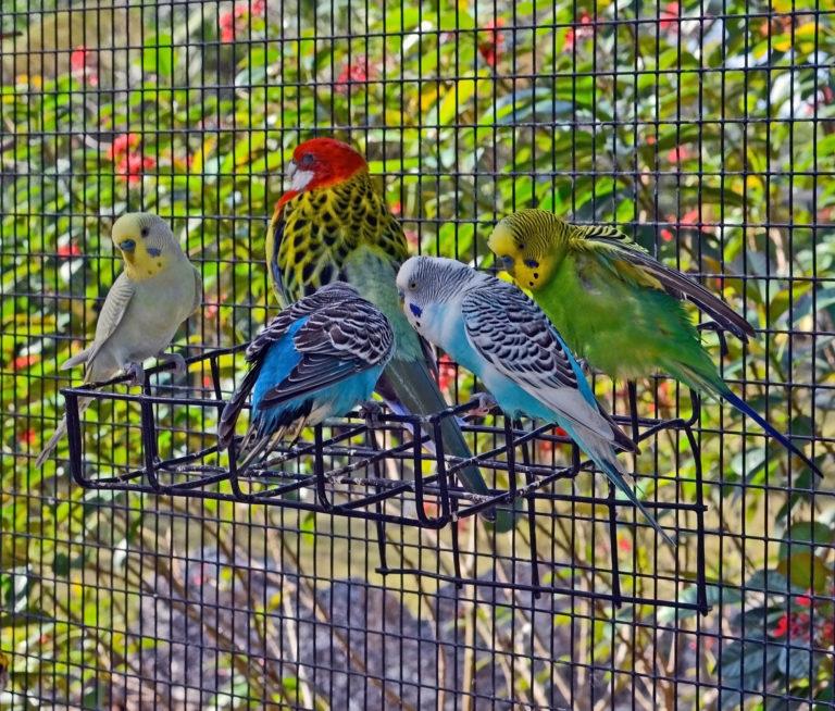 volières pour oiseaux