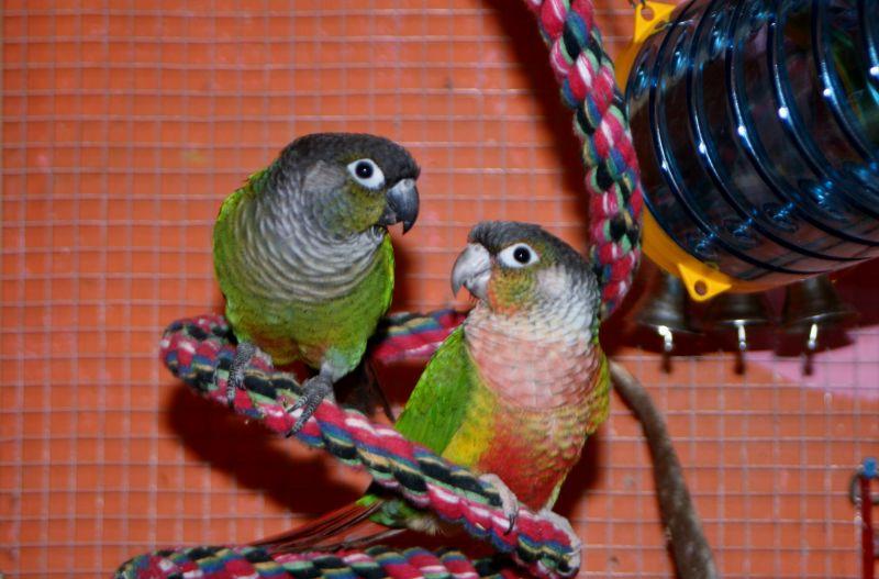 Jouets pour perroquet : des jeux de réflexion pour oiseaux - Magazine  zooplus