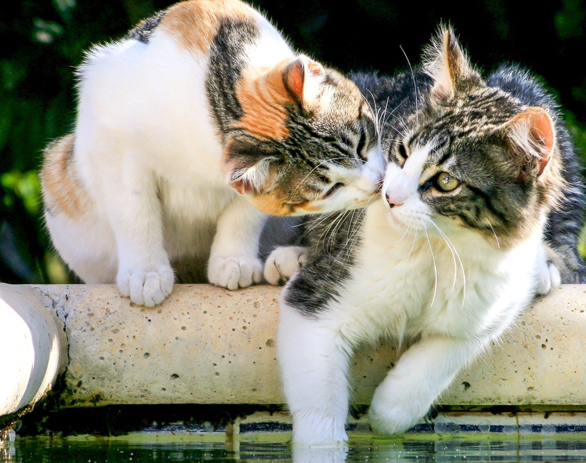 chat rencontres conseils