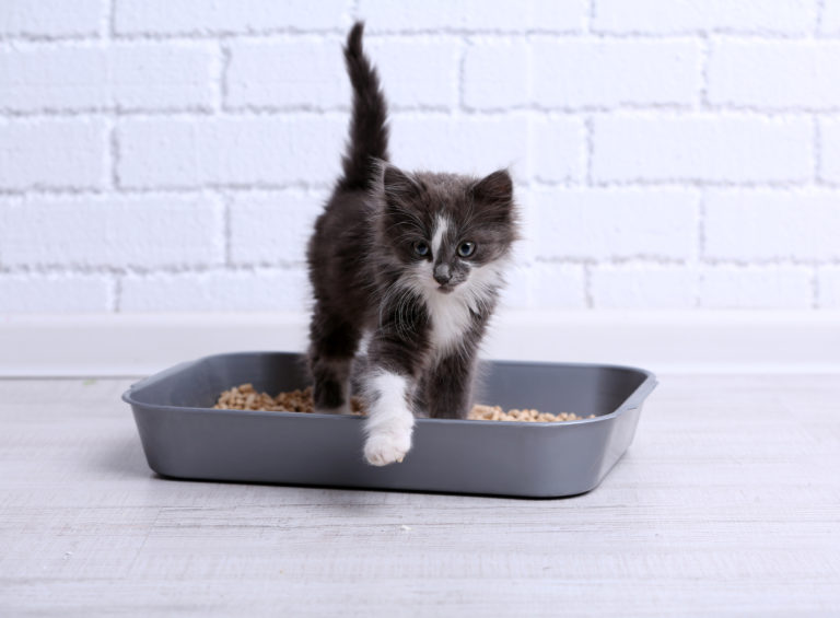toilettes pour chat