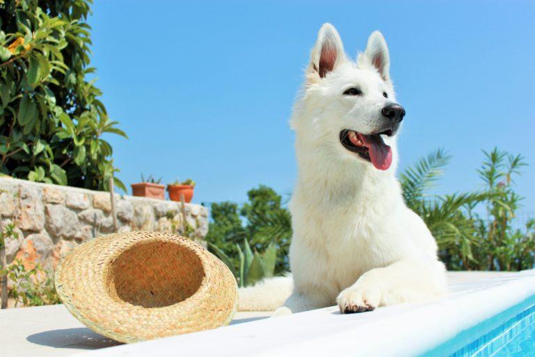protéger son chien en été