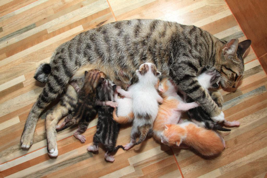 une chatte avec ses chatons