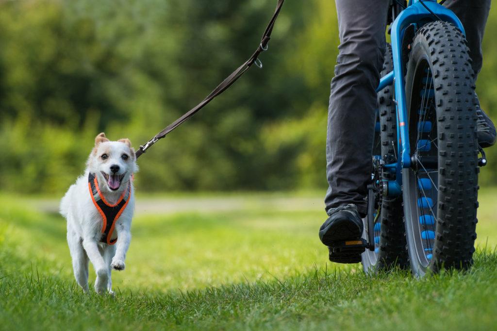 Faire du vélo avec son chien : conseils et astuces - Magazine zooplus