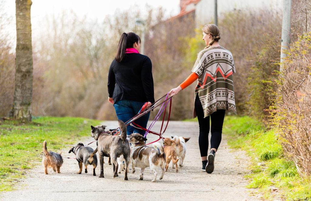 dog sitter pour faire garder son chien