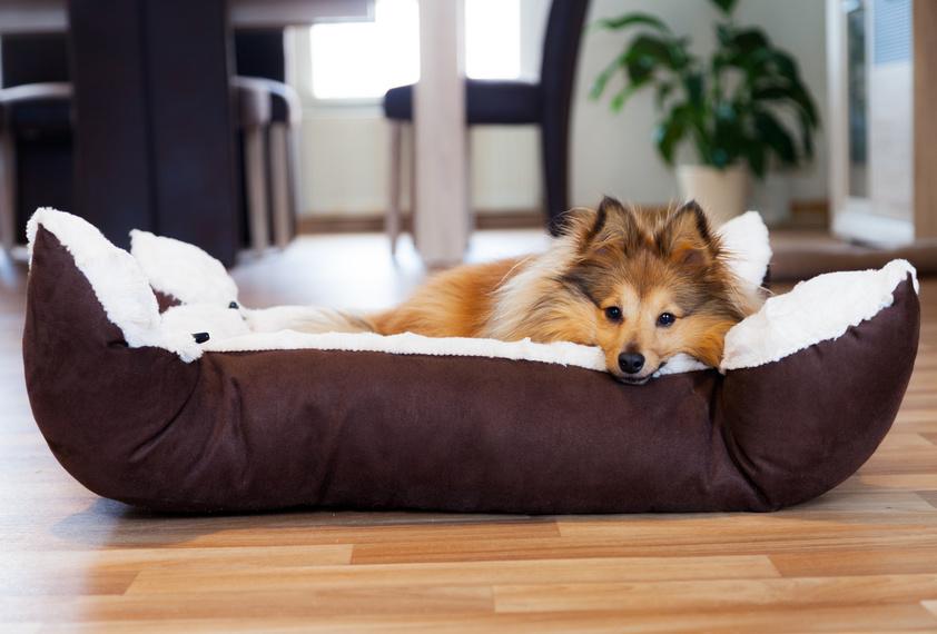 le bon panier pour chien