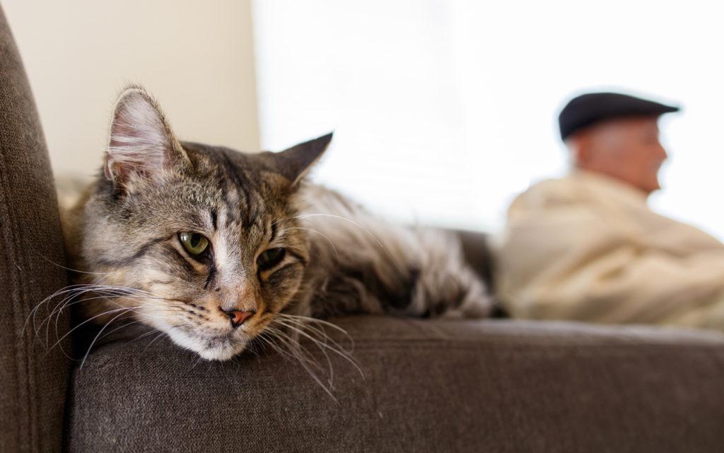 kat der ligger i en sofa
