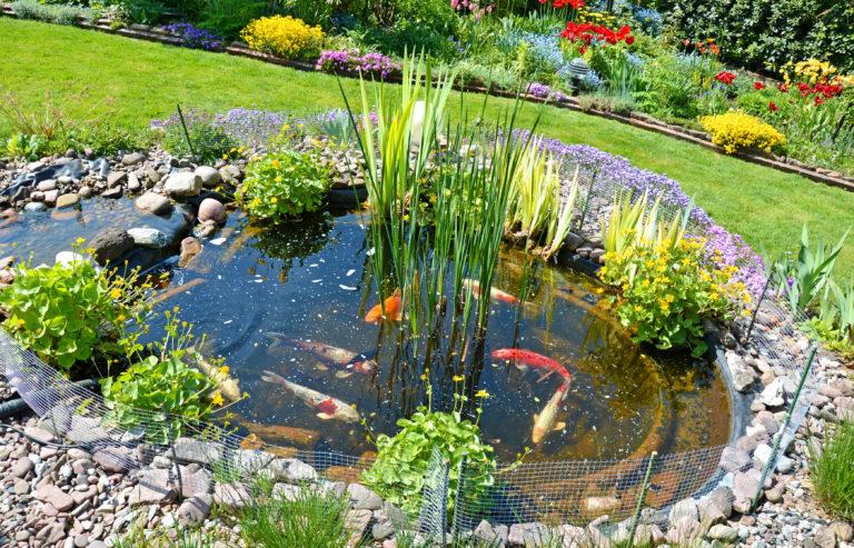 Construire un bassin de jardin pour poissons - Magazine zooplus