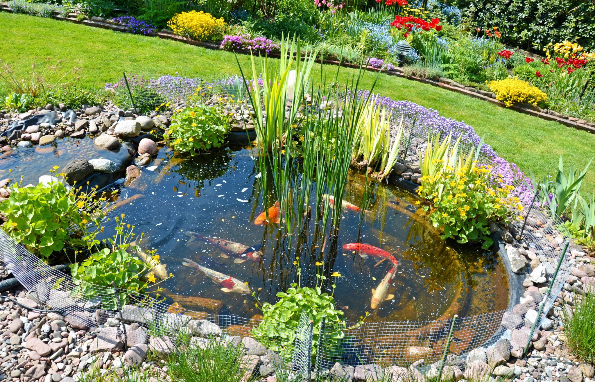 Construire Son Bassin De Jardin construire un bassin de jardin pour poissons - magazine zooplus