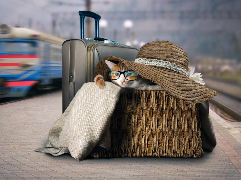 prendre le train avec son chat