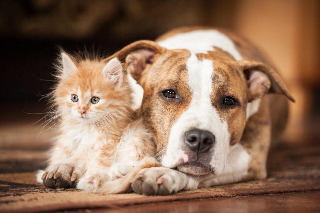 rencontre chiot avec chien adulte
