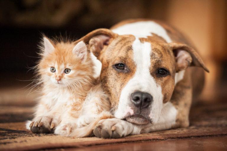 cohabitation entre chien et chat