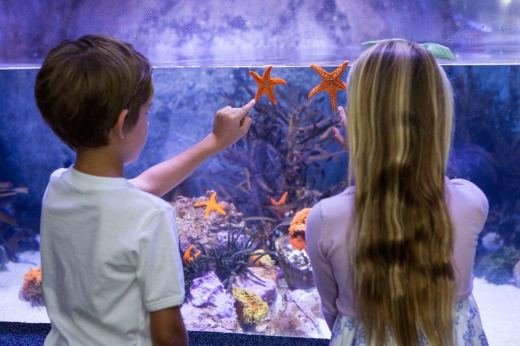taper sur la vitre de l'aquarium