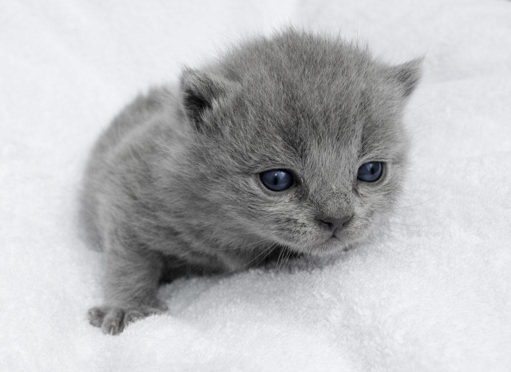 prendre soin d'un chaton