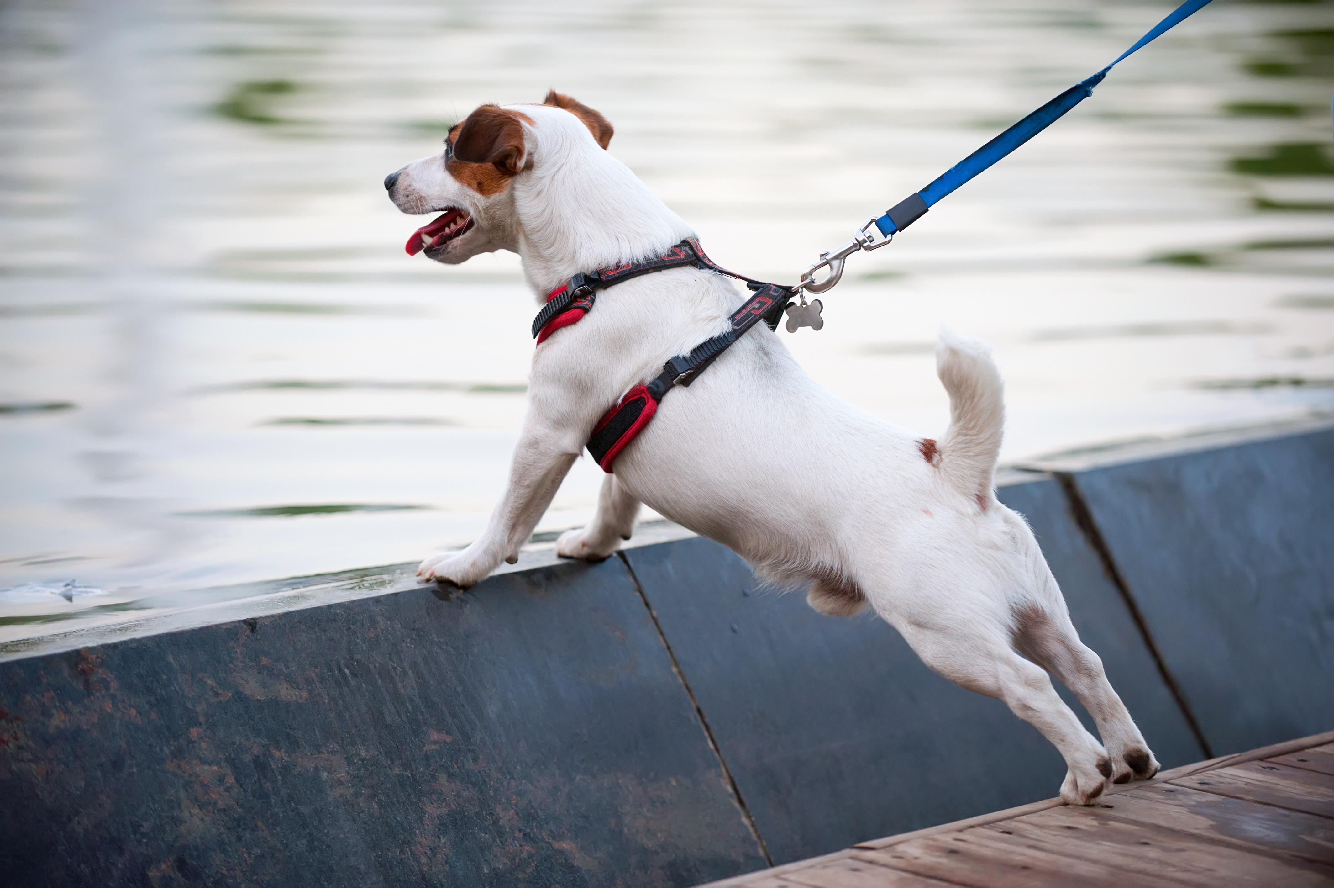 comment choisir la taille du collier pour chien
