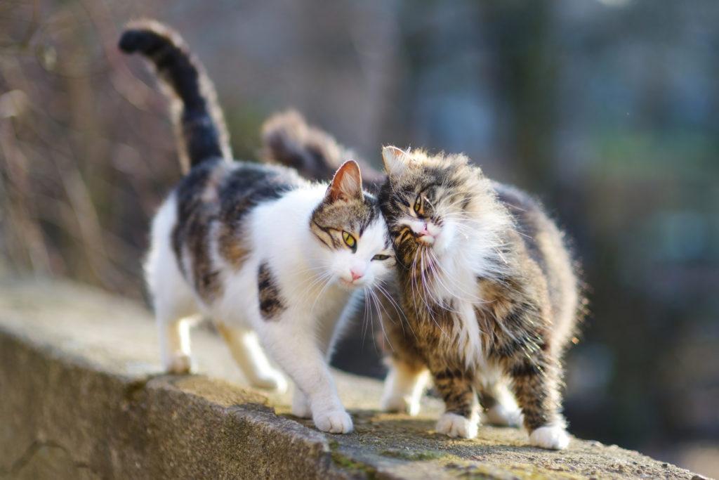 zwei katzen stehen an der wand