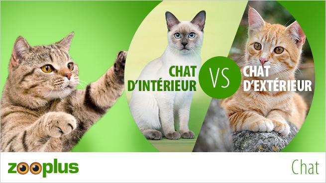 Chat D Appartement Ou Chat D Exterieur Magazine Zooplus
