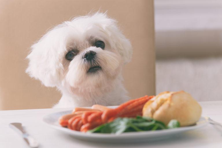 Les aliments dangereux pour la santé des chiens