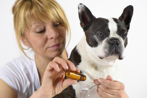 L'homéopathie pour soigner son chien