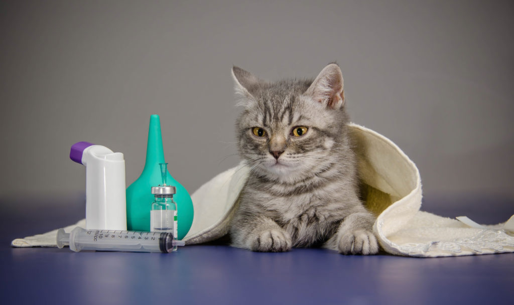trousse à pharmacie pour chat