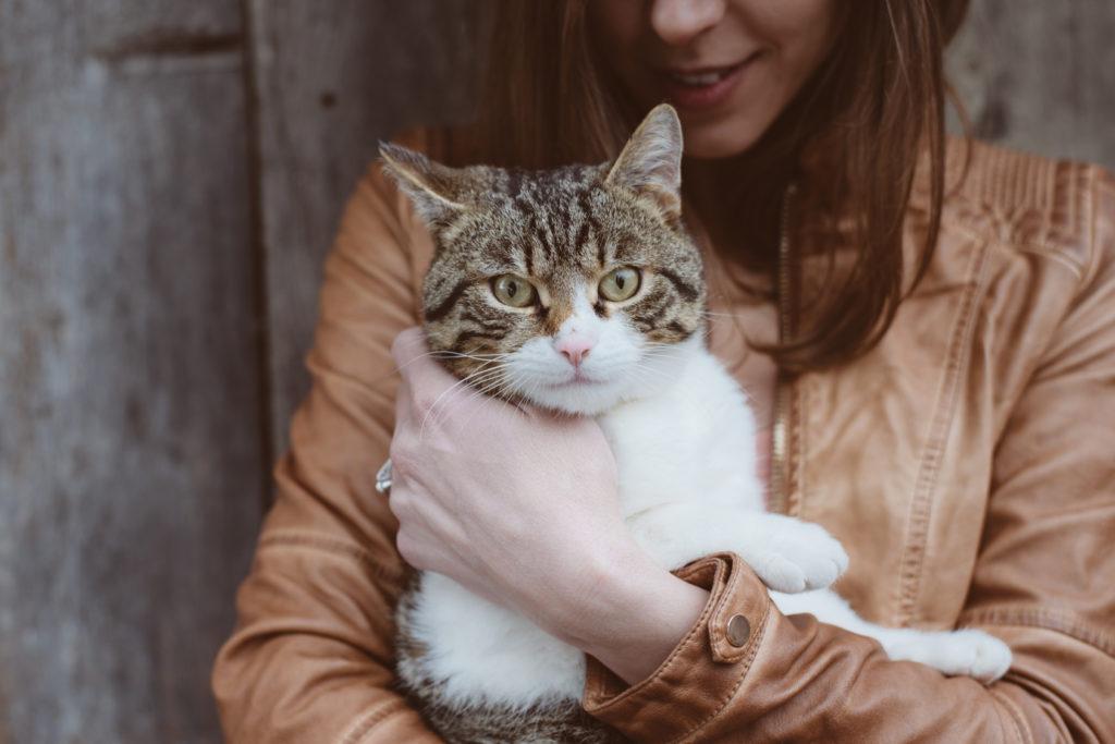 domestication du chien et du chat