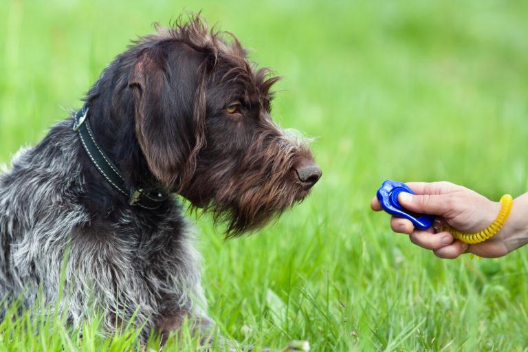 obéissance canine