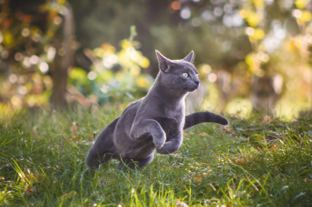 maladies osseuses du chat