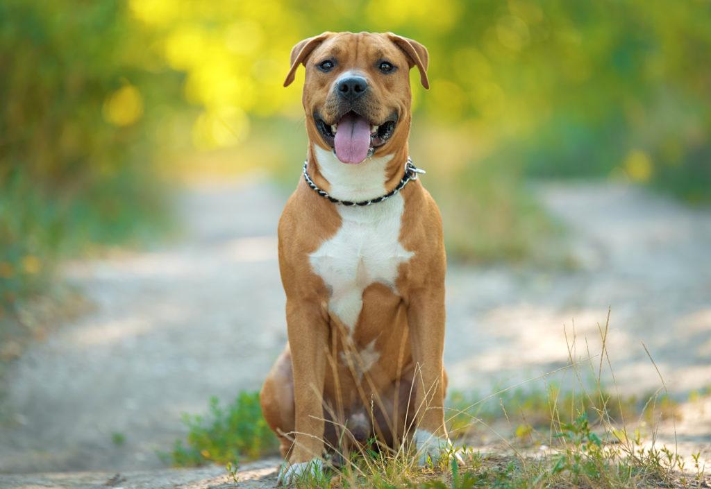 Collier A Chien Anti Aboiement - 20 techniques à connaître - Pro - Blog chien