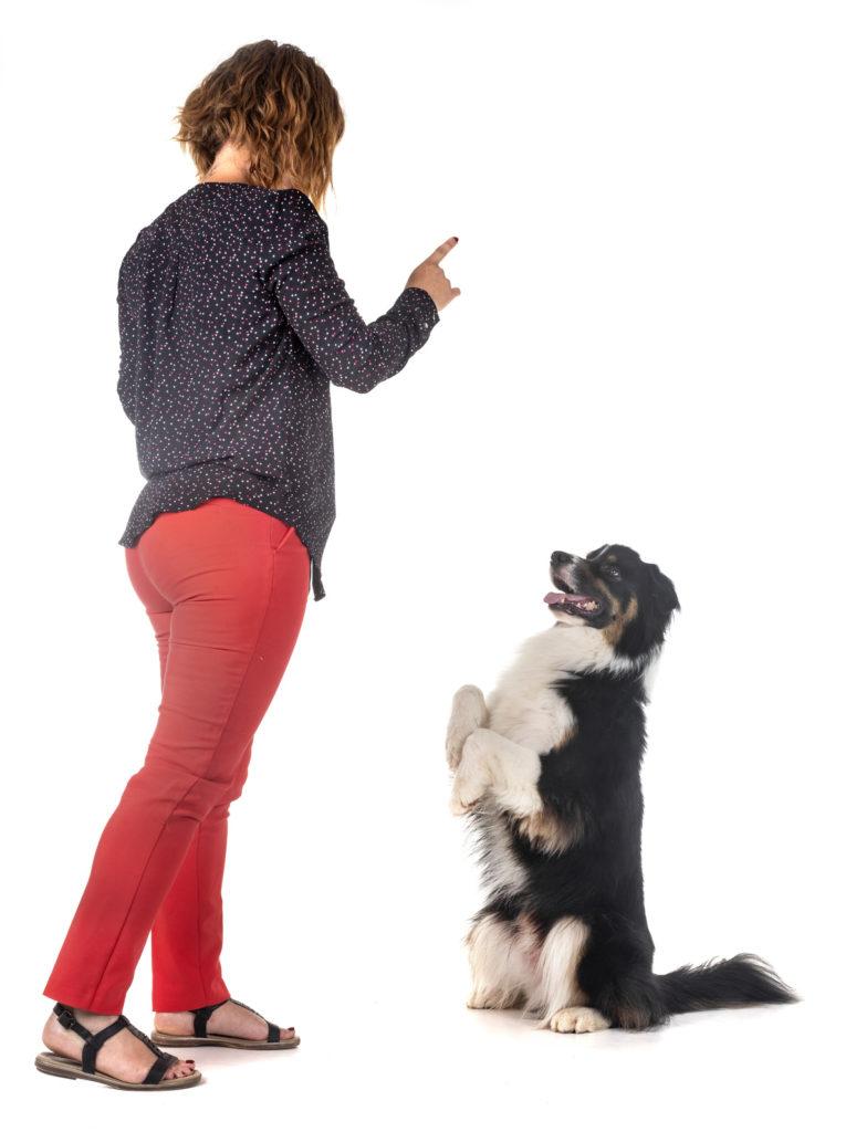 obéissance canine dresser son chien