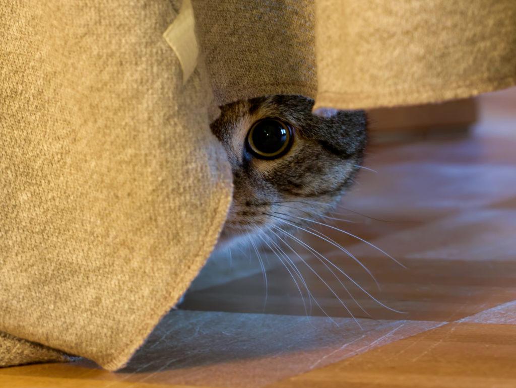 chat peureux que faire