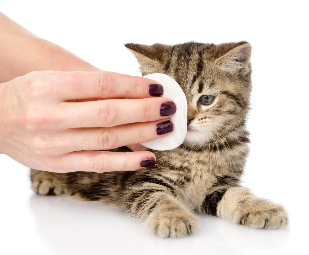 nettoyer les yeux du chat