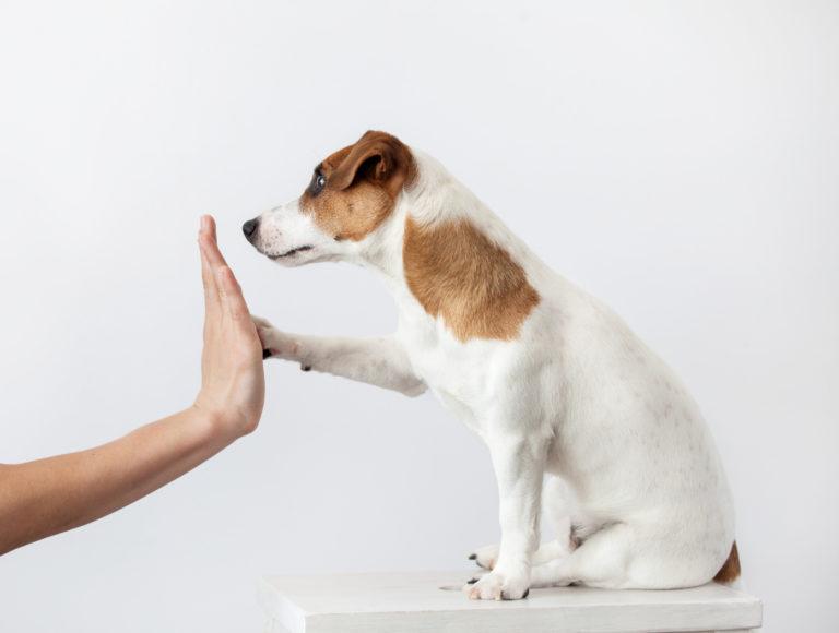 socialización de cachorros