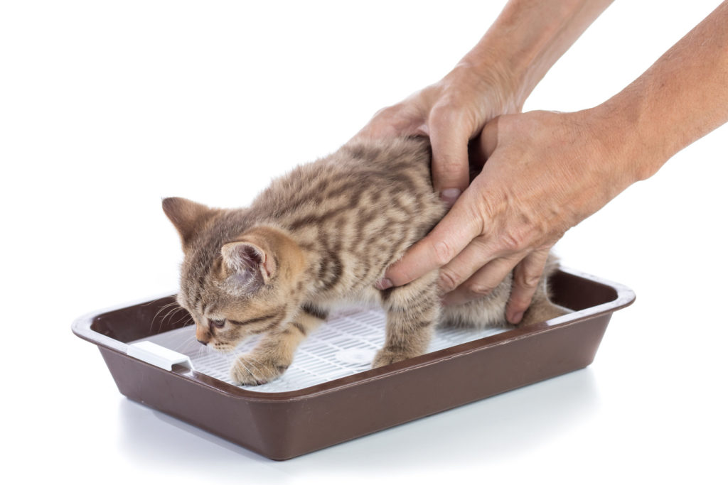 bien éduquer un chaton