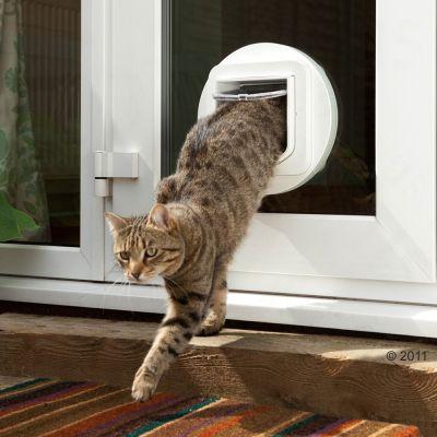 chatière sureflap accessoires pour chat