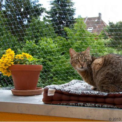 filet de protection accessoires pour chat