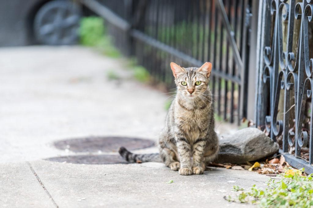 chat d'appartement ou chat d'extérieur