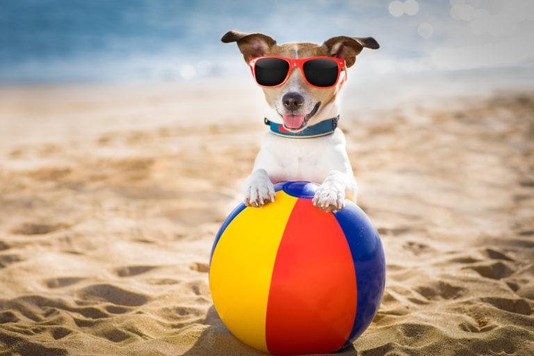accessoires pour chien en été