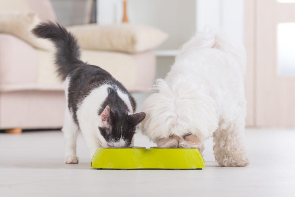 chat mange croquettes chien