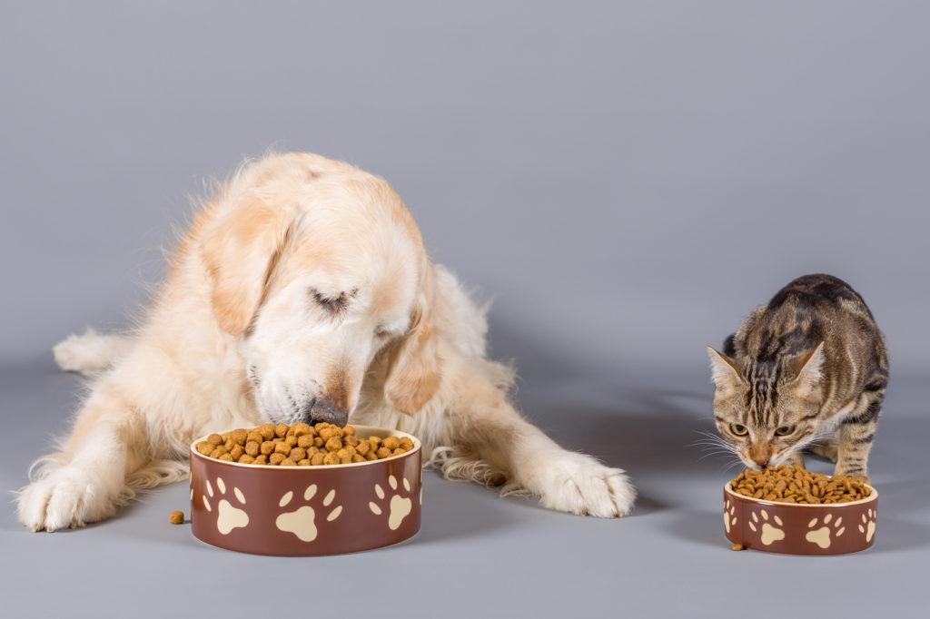 chat mange les croquettes du chien