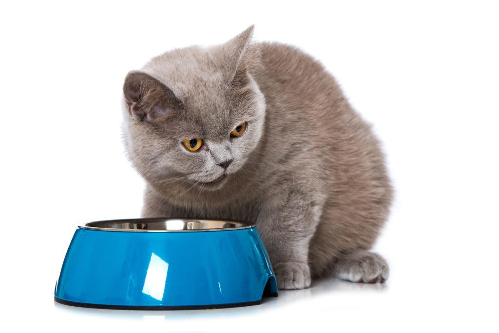 nourriture pour chat sénior