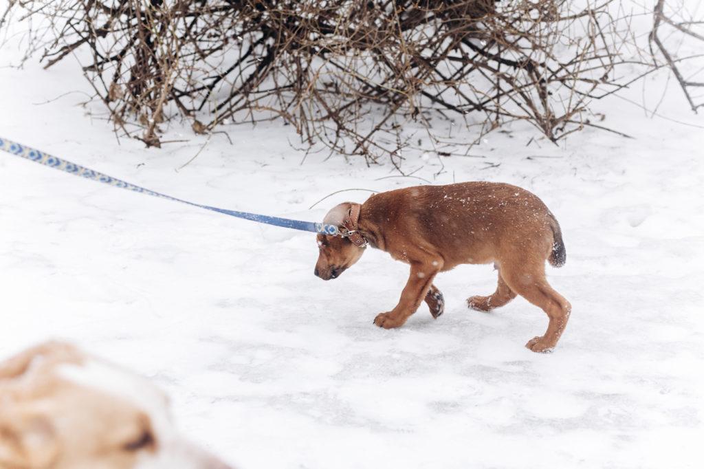 chien peureux : mon chien a peur de tout