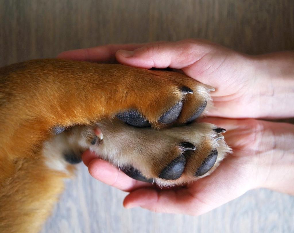 chaussures pour chien